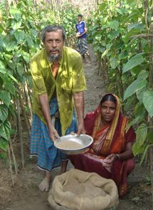 Leaf cultivation