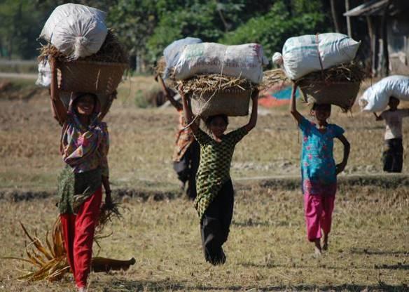 Nangolkot, Noakhali, Bangladesh