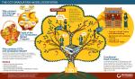cct-grad-model_infographic_final_en1_Medium